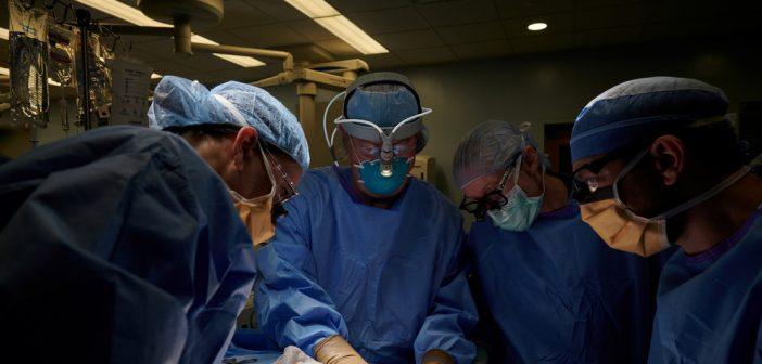 Hacen primer trasplante de un riñón de cerdo a un ser humano